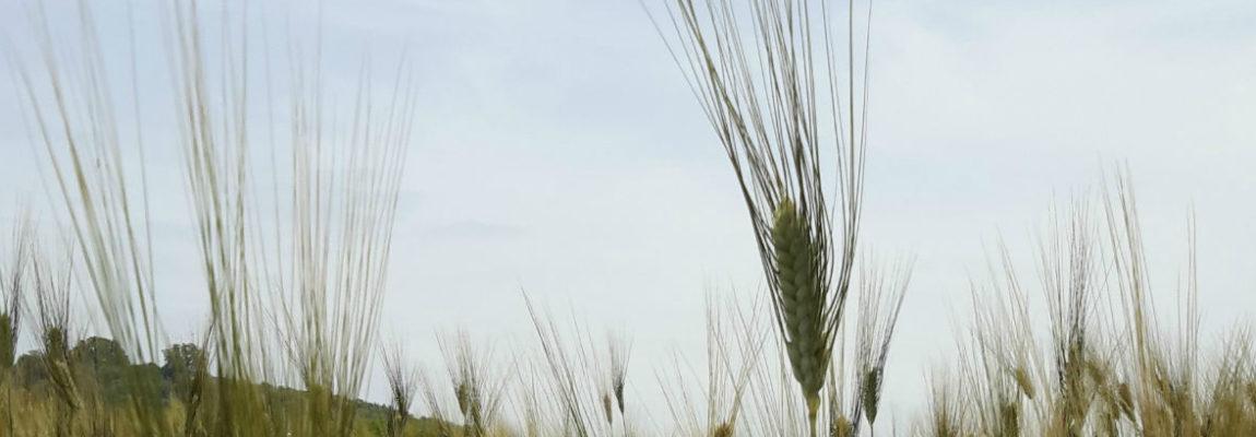 AGRICOLTURA EROICA: UN MODO PER FARE SVILUPPO SOCIALE PARTECIPATO